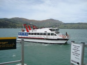 Canterbury Cat arriving Quail Island_640x480