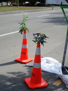 Flowers in cones on Kilmore Street