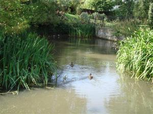 Duckpond at Pirton