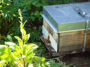 New beehive in the Cottage garden