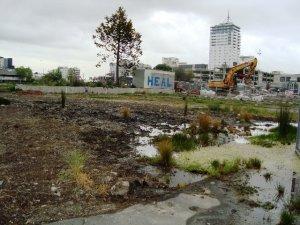 Potential Wetland Garden