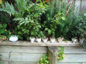 Martha's Pantry Garden
