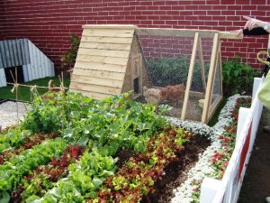 Chickenman's Dig for Victory Garden