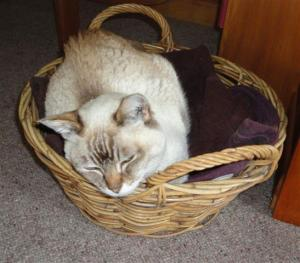 Bentley in basket