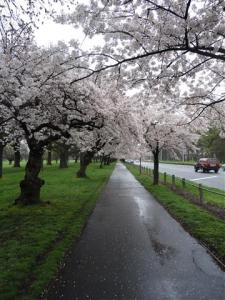 More blossom