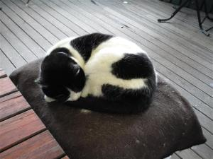 Maxine, the Boatshed cat
