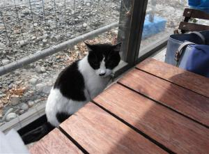 Boatshed cat