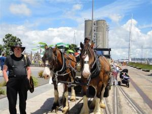 Clydesdales at the Wynyard Quarter