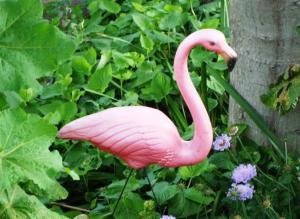 My flamingo