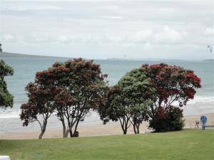 On the beach at Takapuna