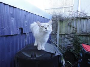 Ziggy on the compost bin