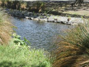 'Restoring' the River