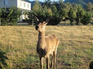 Deer in neighbouring paddock