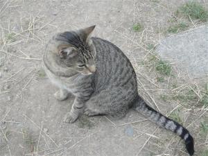 Fonzie, the friendly cat