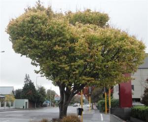 Autumn Tree (Small)