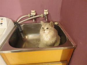 Ziggy in tub