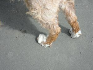 Foamy back paws