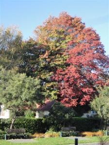 Autumn colour #1 (Small)