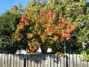Autumn colour #3 (Small)