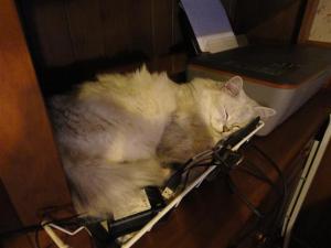 Ziggy in in-tray (Small)