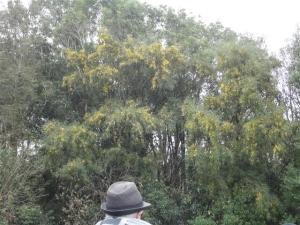 Flourishing native trees in Avon-Otakaro Forest Park