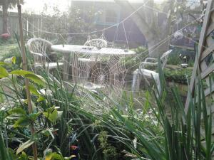 spiders-web-small