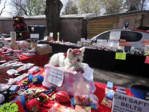 Pet stall, complete with live model.