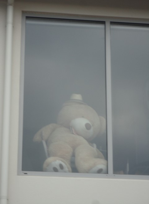 Giant Teddy in McCormack's Bay Rd (Small)